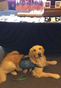 Hercules the dog was at the event to comfort veterans with PTSD.