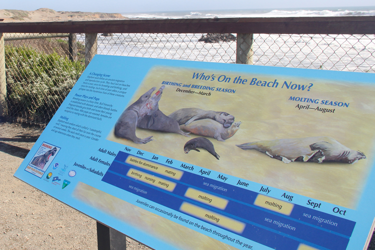 An information display showing the different stages of the elephant seals at the rookery.
