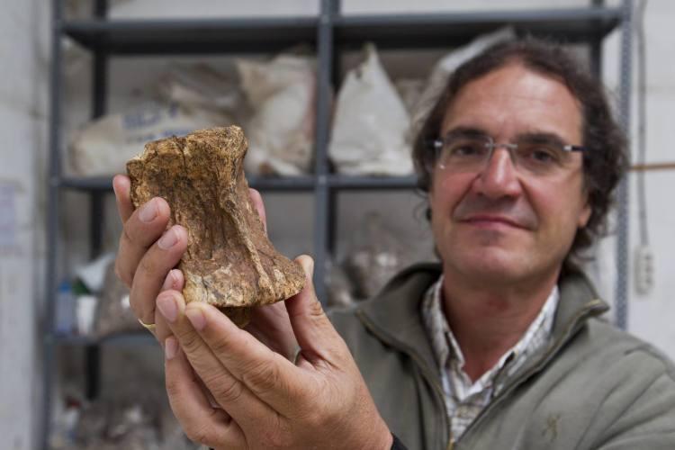 Pablo Arias muestra vértebra cervical de un rinoceronte