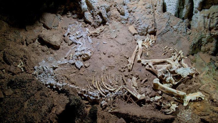 """La galería del león de las cavernas se llamará """"Galería Weitzman-Kreger"""""""