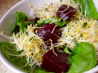 Ensalada con germen de alfalfa