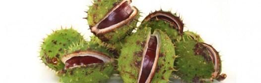 castano de las indias varices