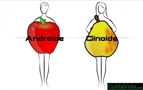 Androide Ginoide