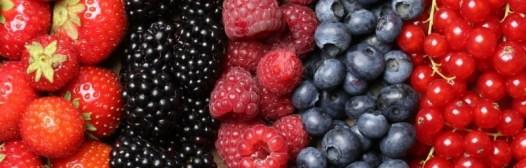frutos rojos bosque