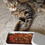 bento shirataki sautes legumes 3 - Shirataki de konjac aux légumes façon chop suey
