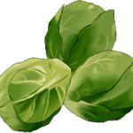choux de bruxelles - Dossier : Fruits et légumes de saison au mois de mars