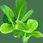 épinards - Dossier : Fruits et légumes de saison au mois d'août