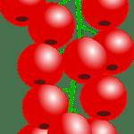 groseille - Dossier : Fruits et légumes de saison au mois d'août
