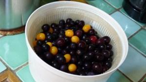 Gelée de prunes sauvages (1)