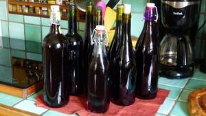 Vin de sureau (4)