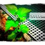 Hark! The Herald Dandelions Sing