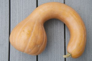 Neck Pumpkin