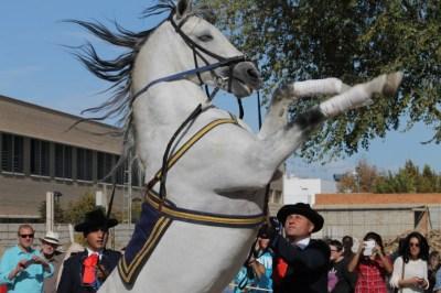 Feria Agroganadera 23