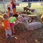 1animalfarm, about Cully Fest Outback & Aboriginal Folk Festival, Cully Fest Petting Zoo, Cully Fest Farm Animals, Cully Fest, Cunnamulla, Queensland Festival, Outback festival, Kids Festival, Family friendly Festival, Queensland School Holidays