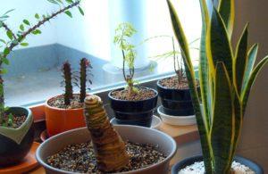 Plantas deixadas dentro de casa podem ficar sobre pratos.