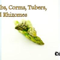 Bulbs, Corms, Tubers, and Rhizomes