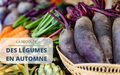 Tout savoir sur la récolte de légumes en automne