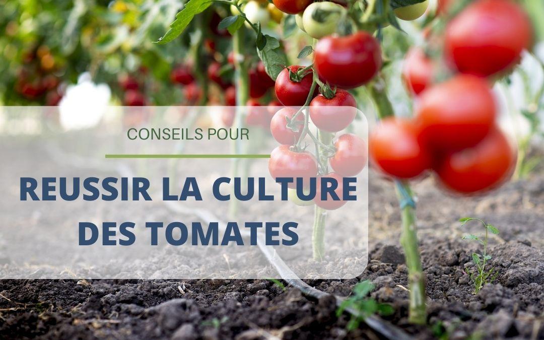 Bien réussir la culture de ses tomates