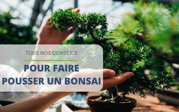 Faire pousser un bonsai