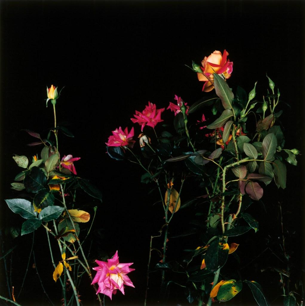 Sarah Jones, The Rose Gardens (Orange) (I), 2002. Stampa a colori. Copyright l'artista. Collezione Fondazione Cassa di Risparmio di Modena