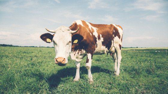 tradisi minum susu di dunia