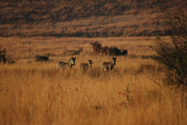 The wild that I found: my journey across Kruger National Park, South Africa