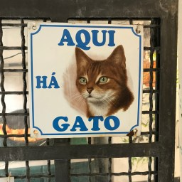 The Torre Argentina Cat Sanctuary