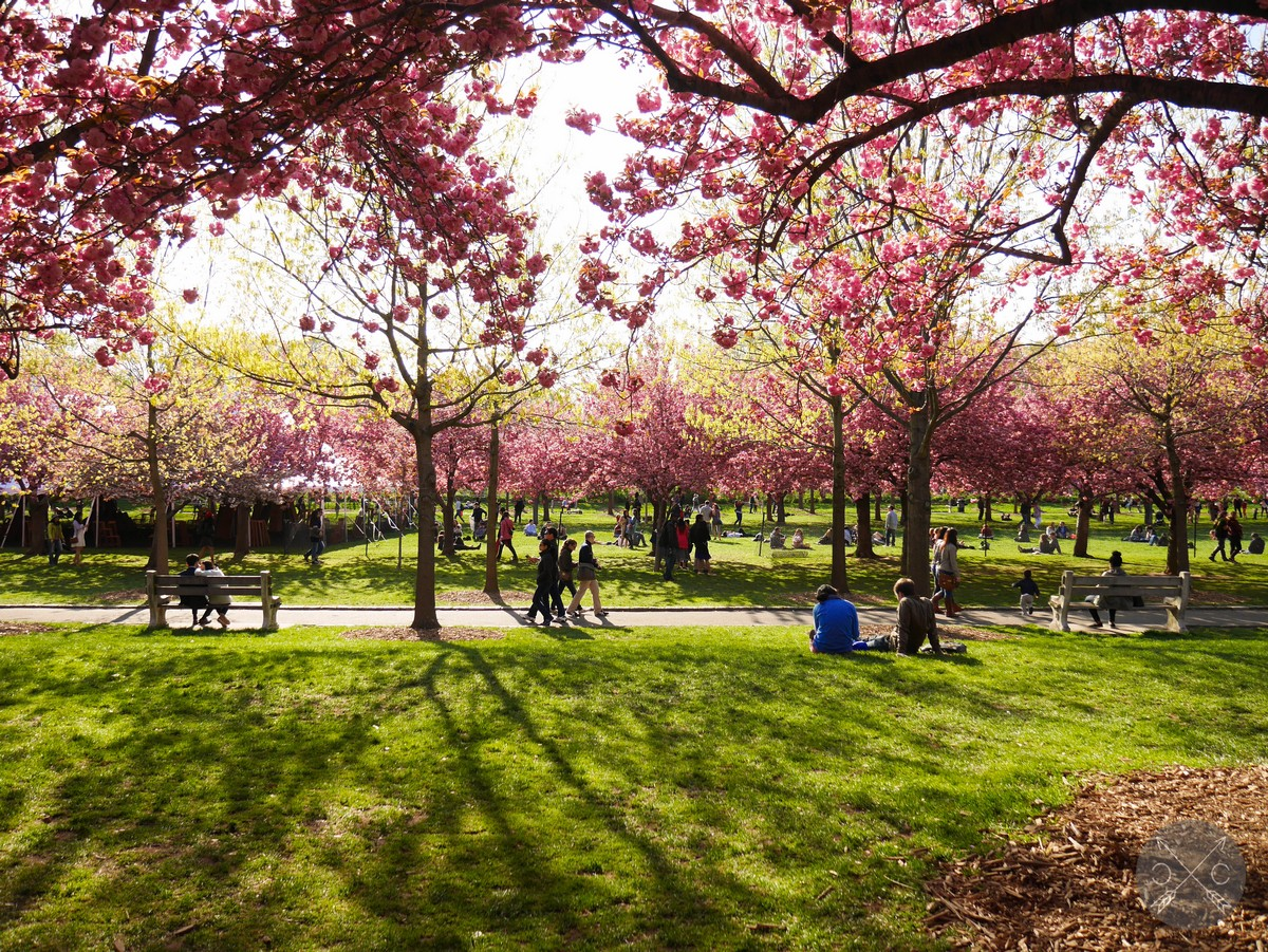 Travel Brooklyn Botanic Garden Cultural Chromatics