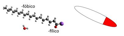 Componente típico del jabón comparado con una molécula de agua.