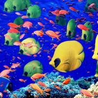 """Nadando contracorriente con """"El libro de los peces de William Gould"""", de Richard Flanagan"""