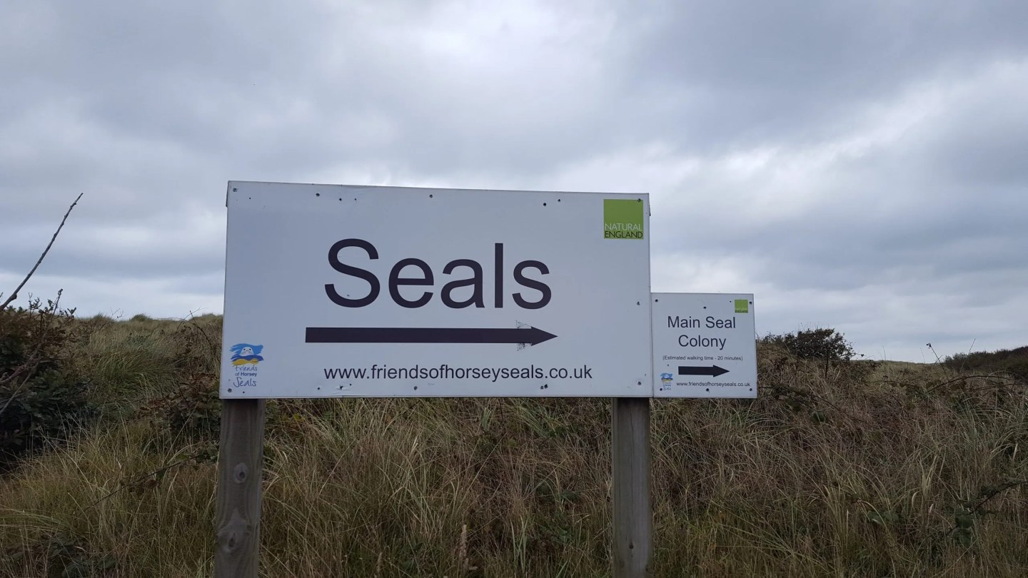 Seal Watching at Horsey Gap In Norfolk