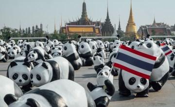 """1600 Pandas+ ถึงไทยแล้ว! เริ่มต้น """"แฟลชม็อบ"""" ครั้งแรกที่ """"สนามหลวง"""""""