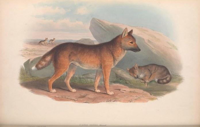 nature illustrations biodiversity heritage library 1