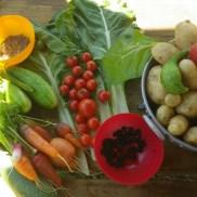 Récoltes d'août : pommes de terre, tomates, côtes de blettes, carottes, radis, mûres, cornichons et graines d'aneth !