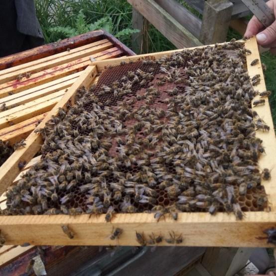 Visite des ruches - Les Grands Voisins