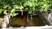 Système aquaponique - Les Grands Voisins