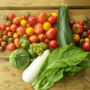 Récoltes d'automne : courgettes, salades, tomates de toutes les couleurs, concombre et raisins !