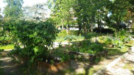 Le jardin Marcotte en automne !