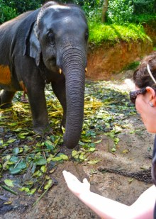 Elephant Freedom Project in Sri Lanka - a real elephant sanctuary in Sri Lanka
