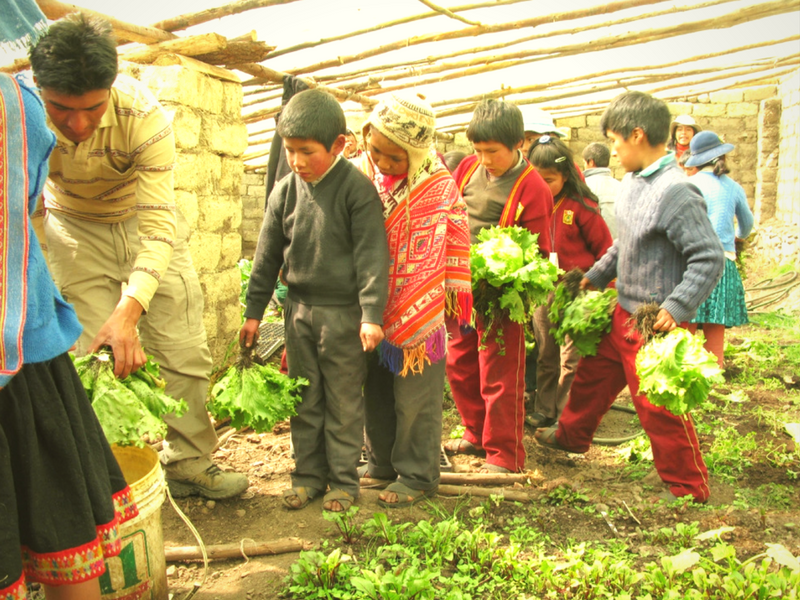 Andean Alliance for Sustainable Development Eco-Friendly Volunteering in Peru