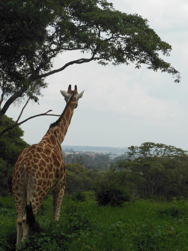 Kenya: A Travel Must
