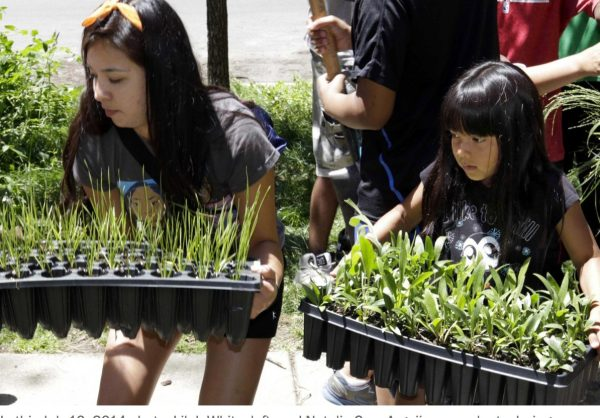 Native Americans connect to past through gardens