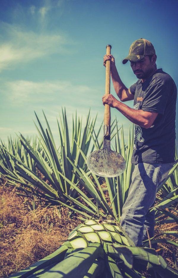 """""""Que Suerte!"""" TASTE DESTINATIONS: MEXICO AND THE EXCITING WORLD OF TEQUILA MAKING"""