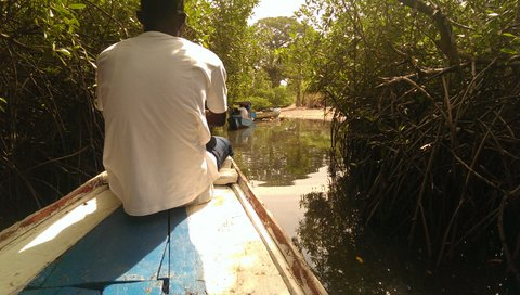 mangrovetunnel