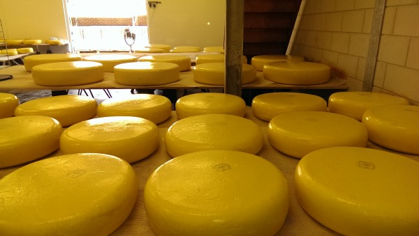 Goudgele kaas bij kaasboerderij Schep