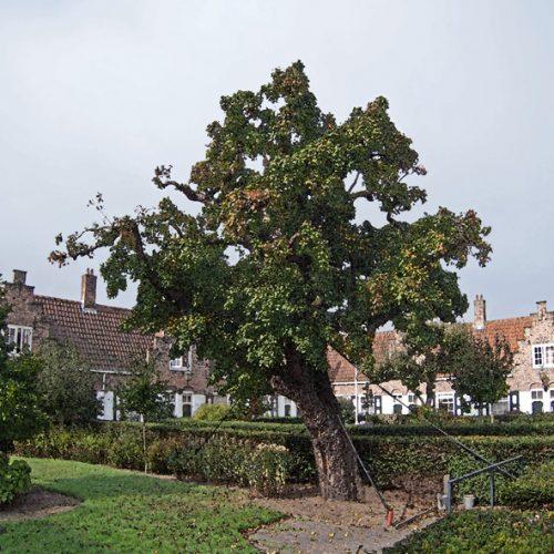 Haagsche Vliet, Heilig Geesthofje