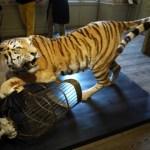 Tier: theatrale composities van opgezette dieren