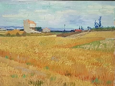 Vincent van Gogh, Korenveld 1888, Olieverf op doek, 50 x 61 cm, Stichting P & N de Boer, Amsterdam
