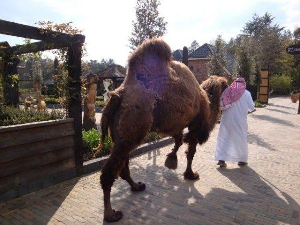 11e Zandsculpturenfestijn Garderen, sjeik Abdul el Sadik met zijn kameel
