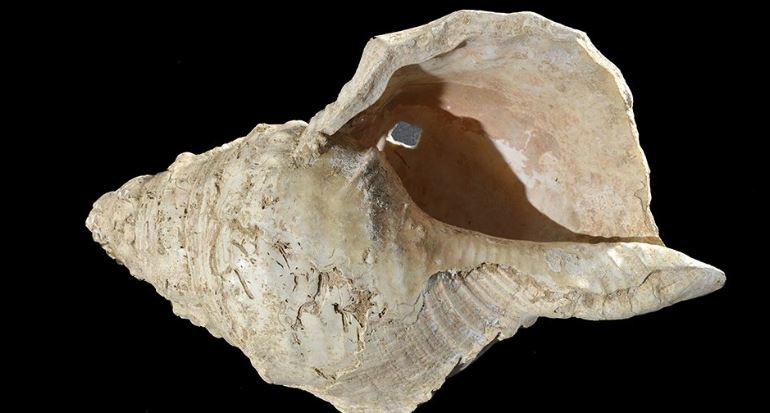 121755120 fransada 17 bin yillik muzik aleti olan deniz kabugu yeniden ses verdi 1